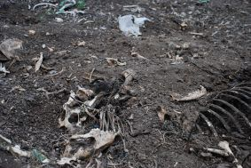 Dead dog bones in 'refuge 0109