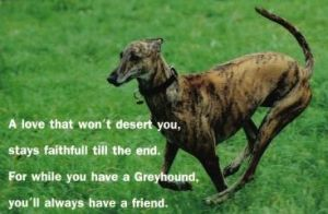 Greyhound poem edit 300