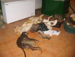 Seville dog pound 3 dead dogs 250