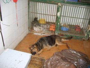 Seville dog pound 10 300
