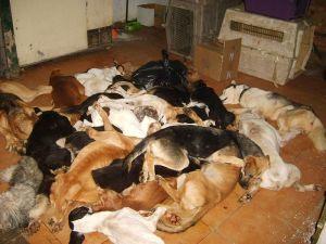 Seville dog pound 7 dead dogs 300