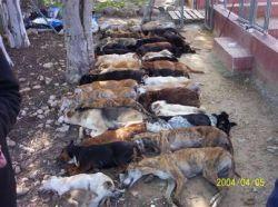 Mass of dead dogs 1 250