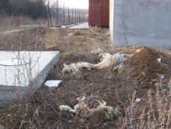 European Union dead dogs 250