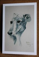 Galgo-card-one