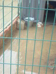 Kimba refuge Cadiz 5 02 2010 190