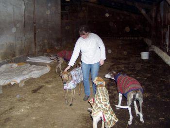 Dog Coats compound