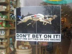 Don't Bet on It greyhound campaign 10 2010 250