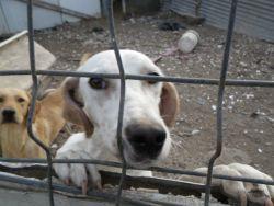 Perros en las chabolas 1a 250