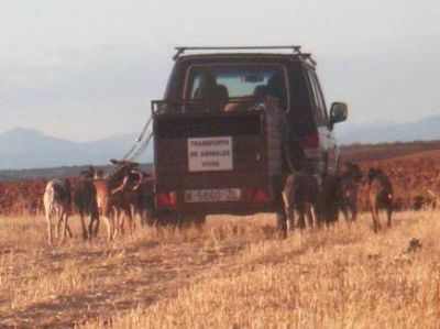Training galgos 1 400