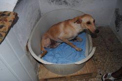 Carlos2 IHR Valerie Wood 29 11 2010 250