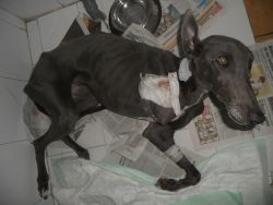 Naisey after operation 24 11 2010 250