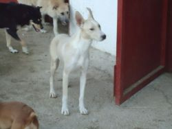 Blanca 111 2010 250