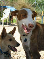 Sandy with Floyd  190 Tina July 2011
