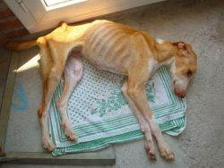 Protectora Tarragone 250 starved 08 2011