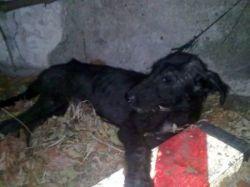 Puppy 1 250 El Albergue 08 2011