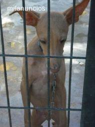 Cadiz pup on death row 190 09 2011