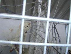 Olivenza January 2009 250 cage