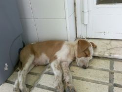 Dumped Cordoba 06 2011 250