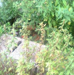 Valencia mom crop 1 06 2011 250