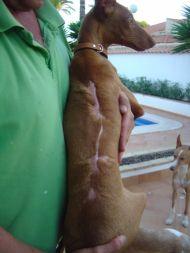 Lucia back 2 190 Tina 09 2011
