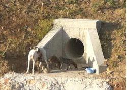 Cordoba galga w puppies  250 1 El Arca de Noe 16 05 2011