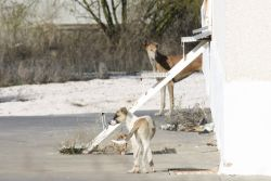Cordoba galga & pup road 2 250 12 2011