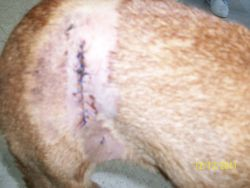 Lucy accident 250 4 12 2011
