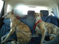 The Badajoz gALGOS 200 15 3 2012