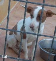 Malaga perrera pup lali 190 11 3 2012