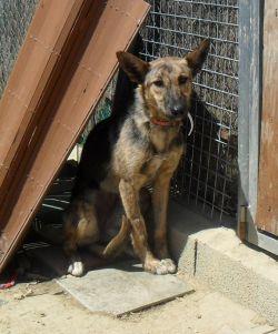 Tripod Dogs For Adoption Uk