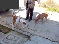 Valencia perrera 2 dogs 250 2 2012