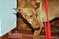 Haku 1 Arca de Noa Cordoba 8 2012