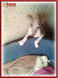 Baas sick puppy 190 8 2012