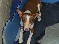 Linda 250 dog links 1 7 2012