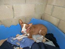 Linda 2 250 dog links 7 2012