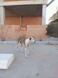 Huelva galga 190 11 2012