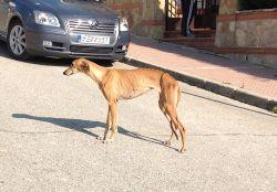 Cordoba galga Lara 250 12 2012