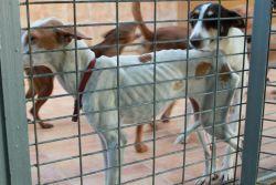 Malaga perrera 250 11 2012