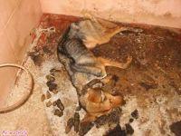 Dead dog in perrera 200 12 2012