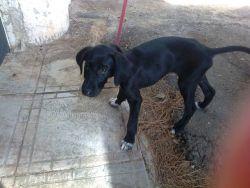Macu Seville puppy 250 9 2012