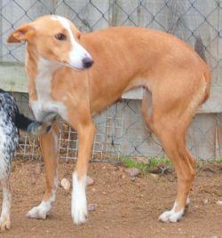 Scooby Tula.crop 250 JPG