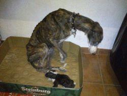Cordoba perrera galga 250 26 10 2012