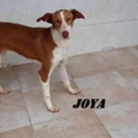 Valencia saved Joya 200