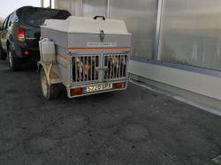 Trailer w dogs Malaga 25 7 2013WP_000482