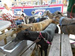 Greyhound friends Pub-stop 250