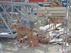Bev Neo Dallas building site 250 10 2013