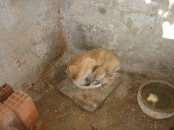 Portugal Dog Rescue Foguete 250 1 9 12 2013