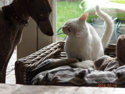 Fada with cat  Mieke Coryn  250 22 2 2014