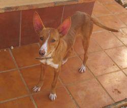 Trixie Pepa 2 250
