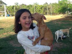 Seville dogs Luigi 250 18 4 2014